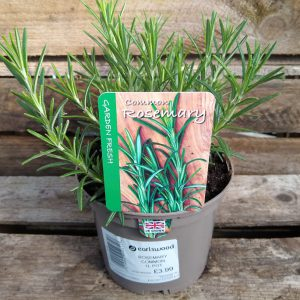 ROSEMARY COMMON 1L HERB