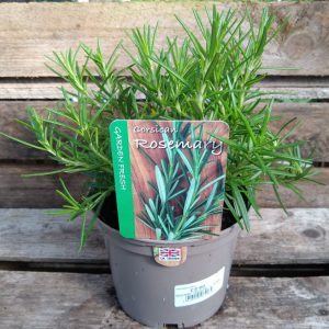 ROSEMARY CORSICAN 1L HERBS