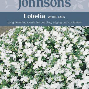 LOBELIA WHITE LADY