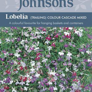 LOBELIA (TRAILING) COLOUR CASCADE MIXED