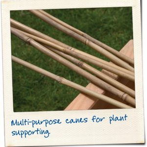BAMBOO CANES 1.5m x10 – NATURAL (APPROX. 5ft)
