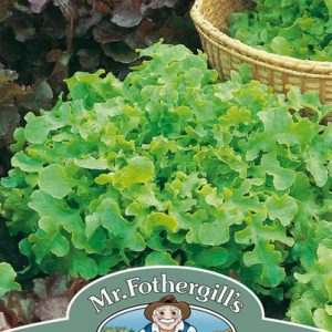 LETTUCE SALAD BOWL RED & GREEN MIXED
