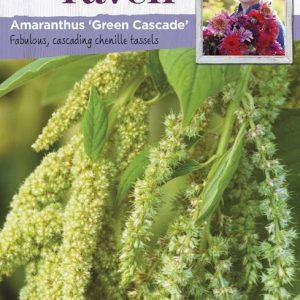 SRCF-AMARANTHUS GREEN CASCADE