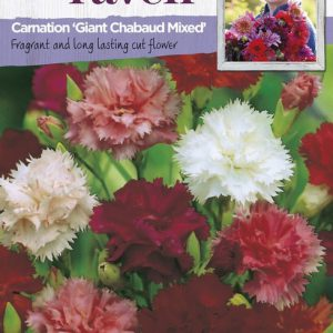 SRCF-CARNATION GIANT CHABAUD MIXED