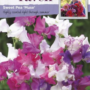 SRCF-SWEET PEA MUSE
