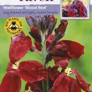 SRCF-WALLFLOWER BLOOD RED