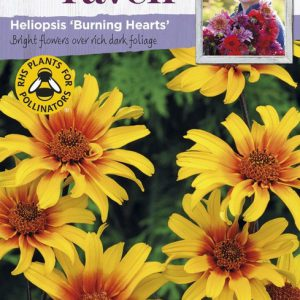 SRCF-HELIOPSIS BURNING HEARTS