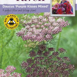 SRCF-DAUCUS PURPLE KISSES MIXED