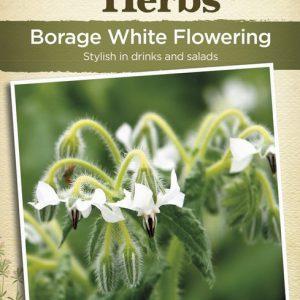 JK-BORAGE WHITE FLOWERING