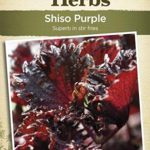 JK-SHISO PURPLE