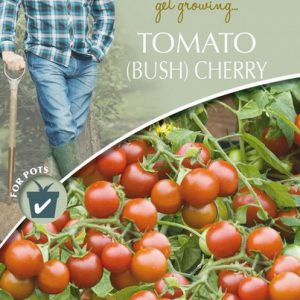 DD TOMATO (BUSH) CHERRY