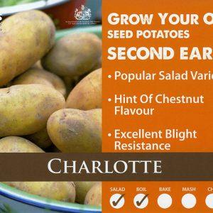SEED POTATOES – CHARLOTTE – 2kg