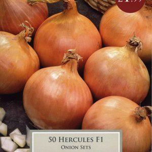 ONION HERCULES F1 – 50 SETS PACK
