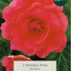 BEGONIA PINK DOUBLE  – 3