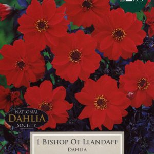DAHLIA BISHOP OF LLANDAFF  – 1