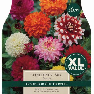DAHLIA DECORATIVE MIXED – 4