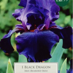 IRIS BLACK DRAGON – 1