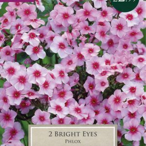 PHLOX BRIGHT EYES – 2