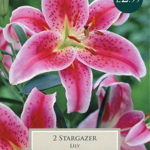 LILY STARGAZER 16-18 P/P