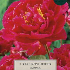 PAEONIA KARL ROSENFIELD – 1